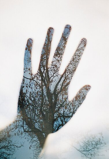 hand in the trees by Tess Smith-Roberts