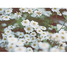 little flowers  Photographic Print
