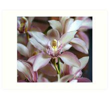 Beautiful Flowers Calendar 1 May Art Print