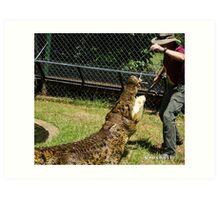 Saltwater Crocodiles Calendar 1 July Art Print