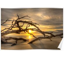 Sunrise through the Tree Poster