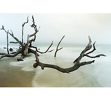 Fallen Tree on Beach Photographic Print