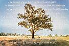 Prayer of the Woods by Linda Lees