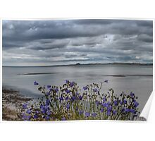 Bamburgh from Holy Island Poster