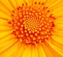 Bright Flower Sticker
