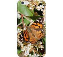 Australian Painted Lady Butterfly iPhone Case/Skin