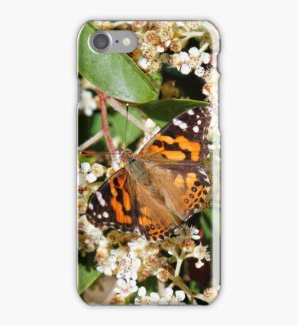 Australian Painted Lady Butterfly iPhone Case/Skin