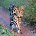 Out for a little stroll!! by jozi1