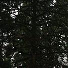Tree limbs by AuntieBarbie