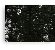 Tree limbs Canvas Print