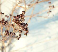 Winter by Briana McNair