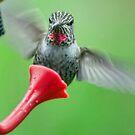 Hummingbird Houdini by Kenneth Haley
