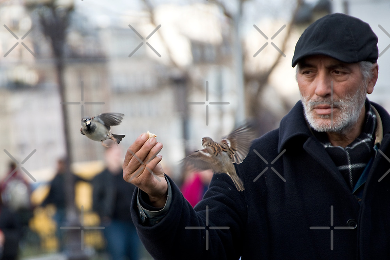 The Birdman of Notre Dame by Country  Pursuits
