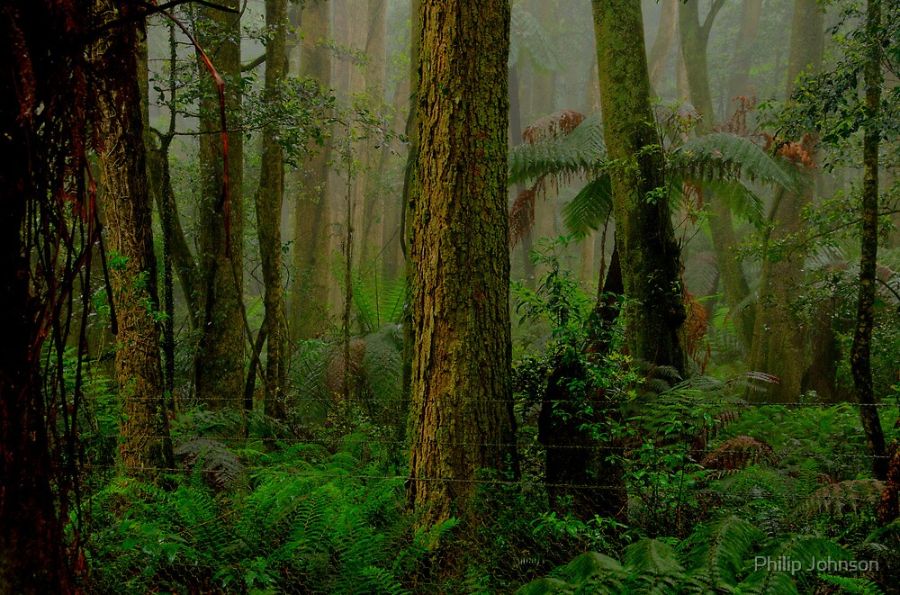 RainForrest Dreaming - Mount Wilson NSW - The HDR Experience by Philip Johnson