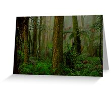 RainForrest Dreaming - Mount Wilson NSW - The HDR Experience Greeting Card