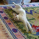 Stretching by simonescott