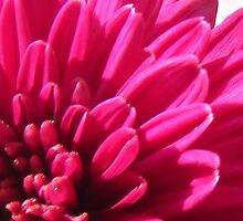 Petals by vitulagarwal