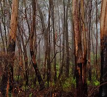 Charred Survivors - Mount Wilson - The HDR Experience by Philip Johnson