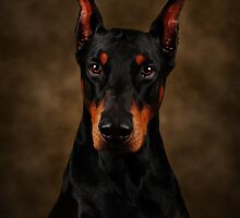 The Doberman by Lover1969
