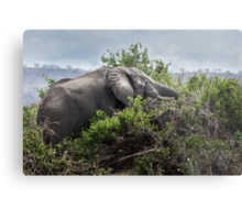 Elephant on the rampage Metal Print