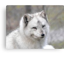 """Elf"" The Arctic Fox Canvas Print"