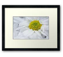Delicate Flower Framed Print