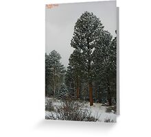 Winter's Magesty Greeting Card