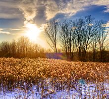 Blendon Woods in Winter by njordphoto