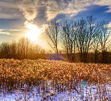 Blendon Woods in Winter by njordphoto
