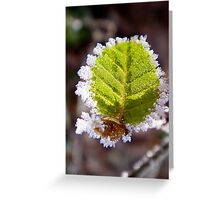 Frosty, light green leaf Greeting Card