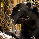 Black Leopard by Linda Gregory