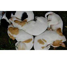 Pups At A Yard Sale Photographic Print