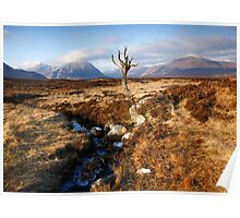 The Solitary Tree, Rannoch Moor Scotland Poster