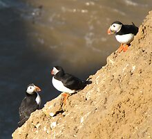 The Three Puffins by Neil Cameron