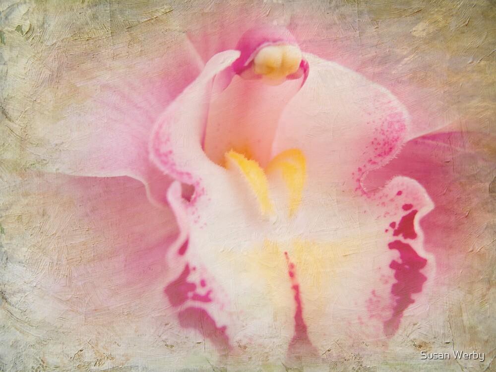Gaze Into My Soul by Susan Werby