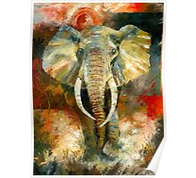 Charging African Elephant Poster