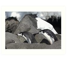 "Chinstrap Penguins ~ ""Follow the leader"" Art Print"