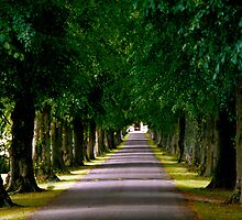 Tree lined drive by Martyn Franklin