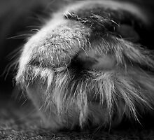 Furry Feet by GreyFeatherPhot