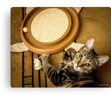 The Turtle Toy Canvas Print