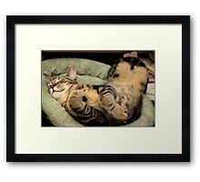Too Big For The Kitten Bed? Framed Print