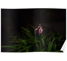 Pitcher Orchid Poster