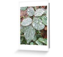 Rain In My Garden Greeting Card