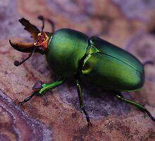 Iridescent Green by Liz Worth