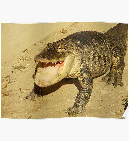Gator Bait Poster