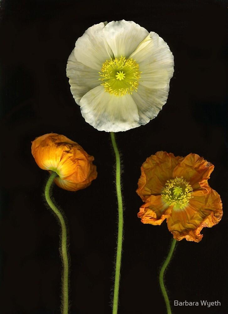 Two Orange & One White by Barbara Wyeth