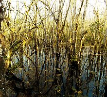Swamp Lake by WetProductions