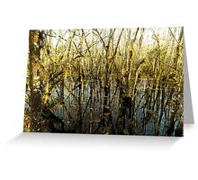 Swamp Lake Greeting Card