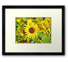 """Sunflower"" by Carter L. Shepard Framed Print"