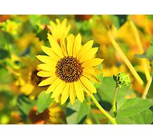 """Sunflower"" by Carter L. Shepard Photographic Print"